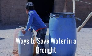Ways to Save Water in a Drought